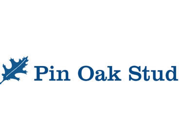 Pin Oak Stud